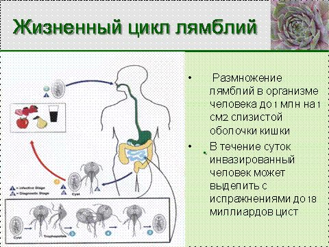 чем лечиться от паразитов в организме человека